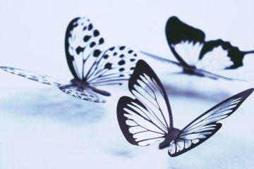 Hodowla motyli w warunkach domowych